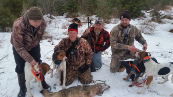 Coyote Hunting w Hounds